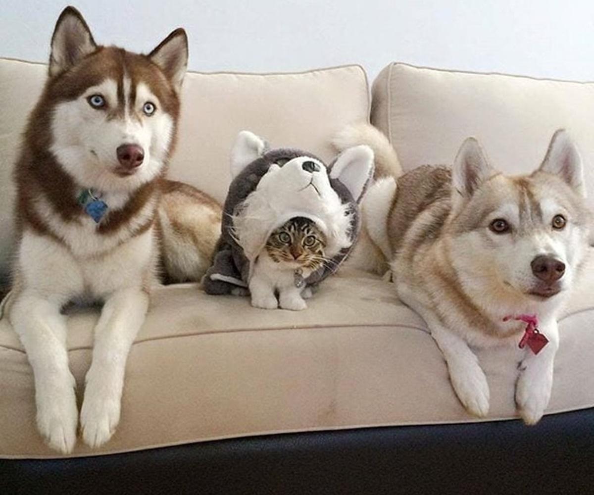 gatto in incognito
