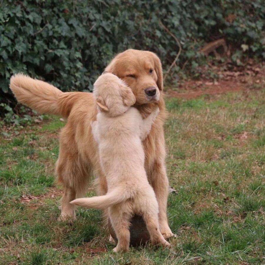 cane abbraccia peloso