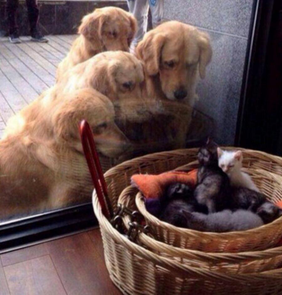 cani gatti cesta