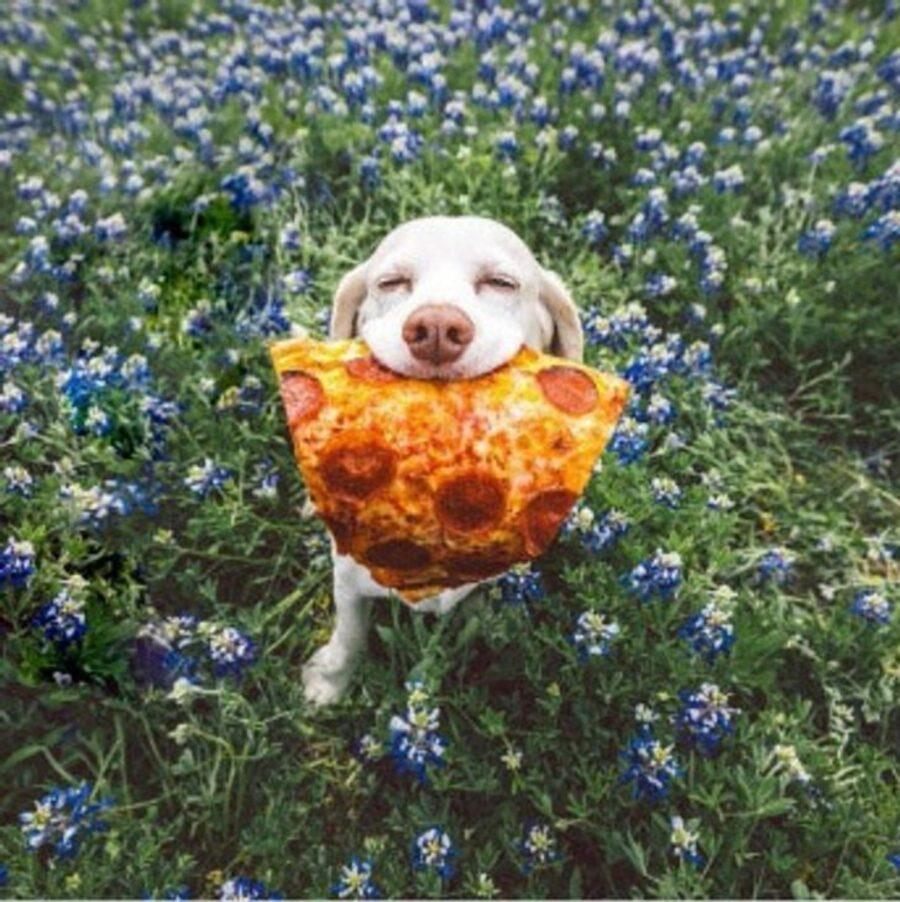 cucciolo pizza fiori