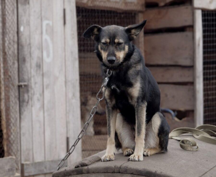 cane legato cattiveria umana