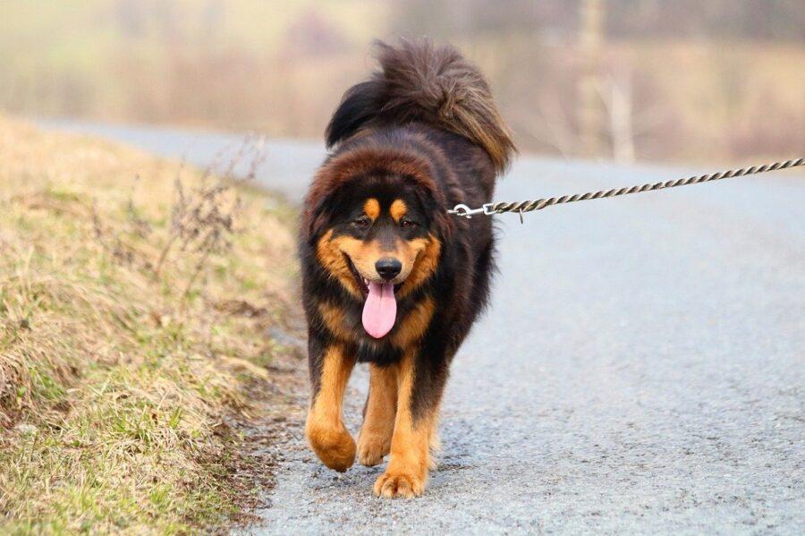 cane strada passeggio