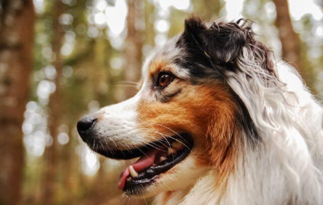 cane fugge via asilo canino
