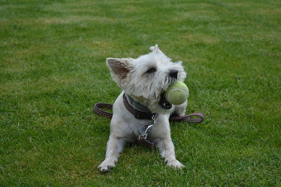 cane erba prato