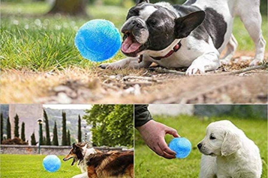 cani giocano con pallina di peluche