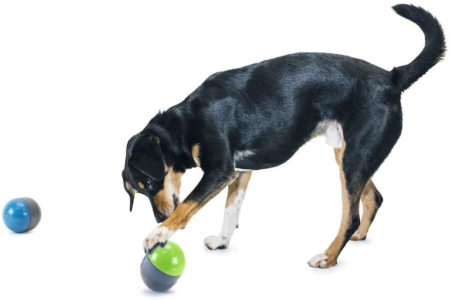 cane gioca con palline