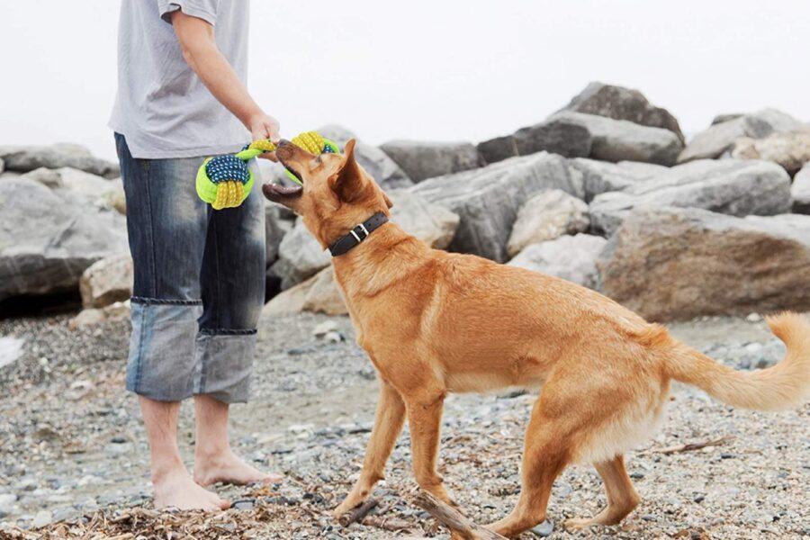cane che gioca con un gioco