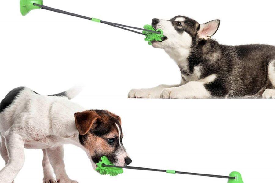cane che gioca con un gioco di gomma