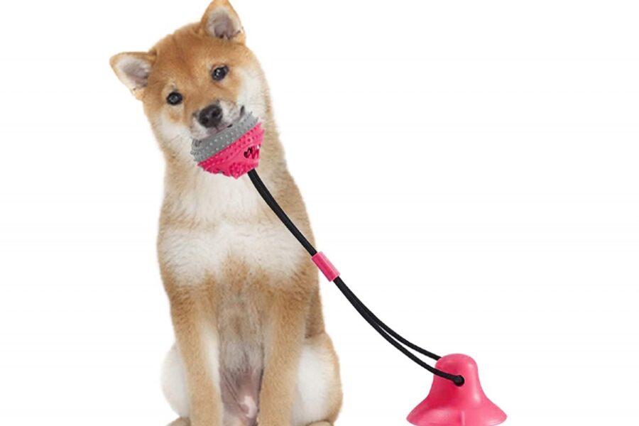 pallina che si fissa al pavimento per cani