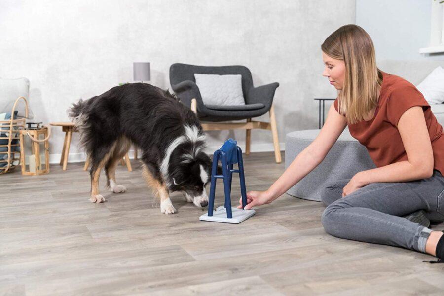 cane che gioca con la padrona