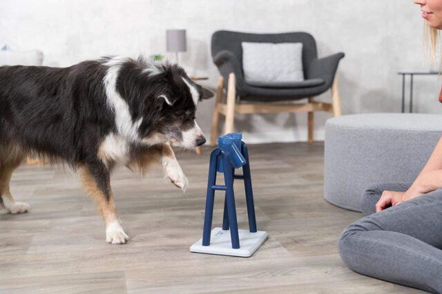cane che gioca con un accessorio interattivo