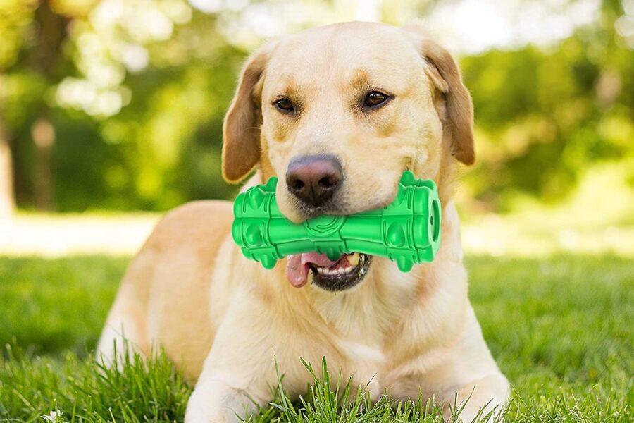 cane con osso sonoro in bocca