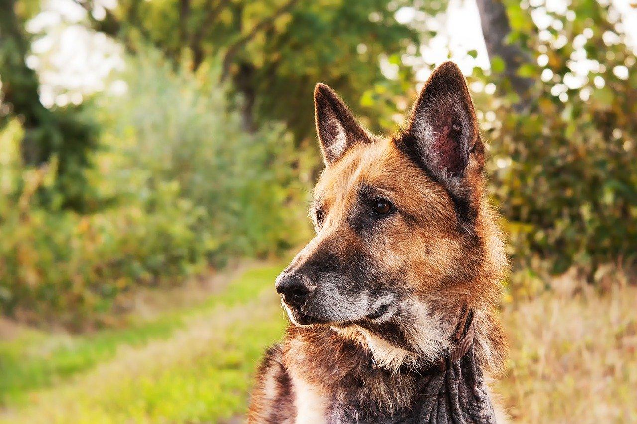 cagnolino in mezzo al bosco