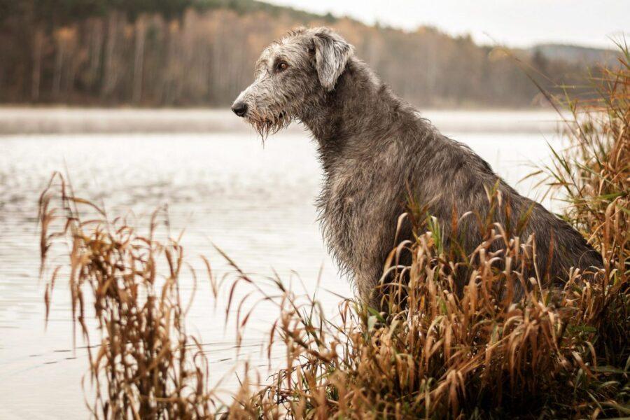 cane in riva al fiume