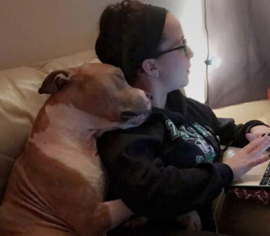 cane pitbull abbraccia mamma