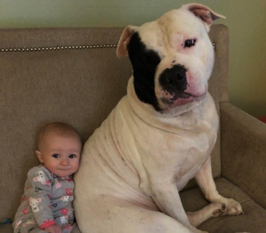 cane si scusa facendo baby sitter