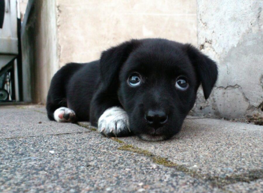 cagnolino nero vicino muro bianco