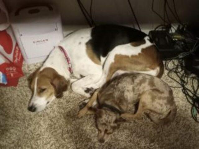 cagnolini dormono insieme