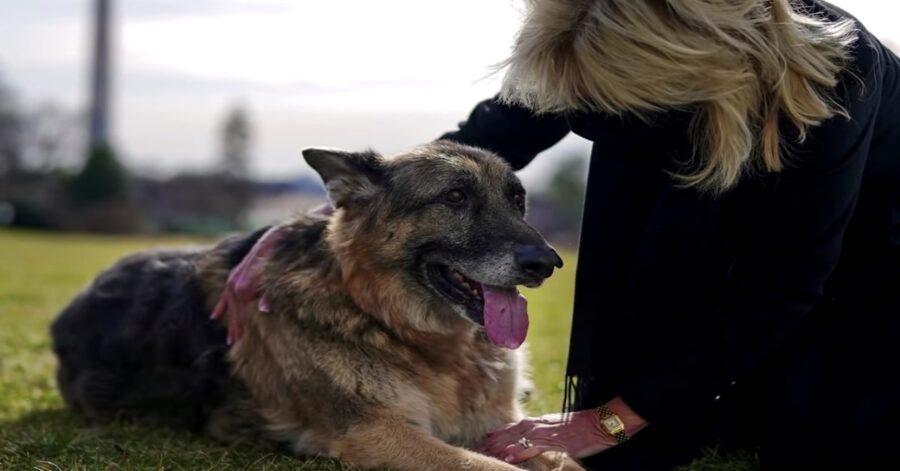First Lady con il cane del presidente Biden