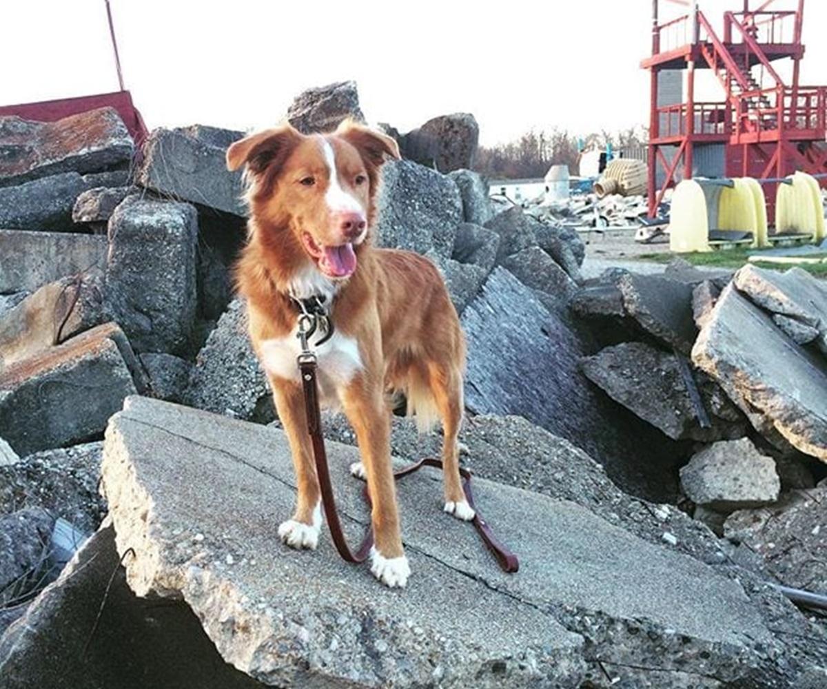 cane maceria