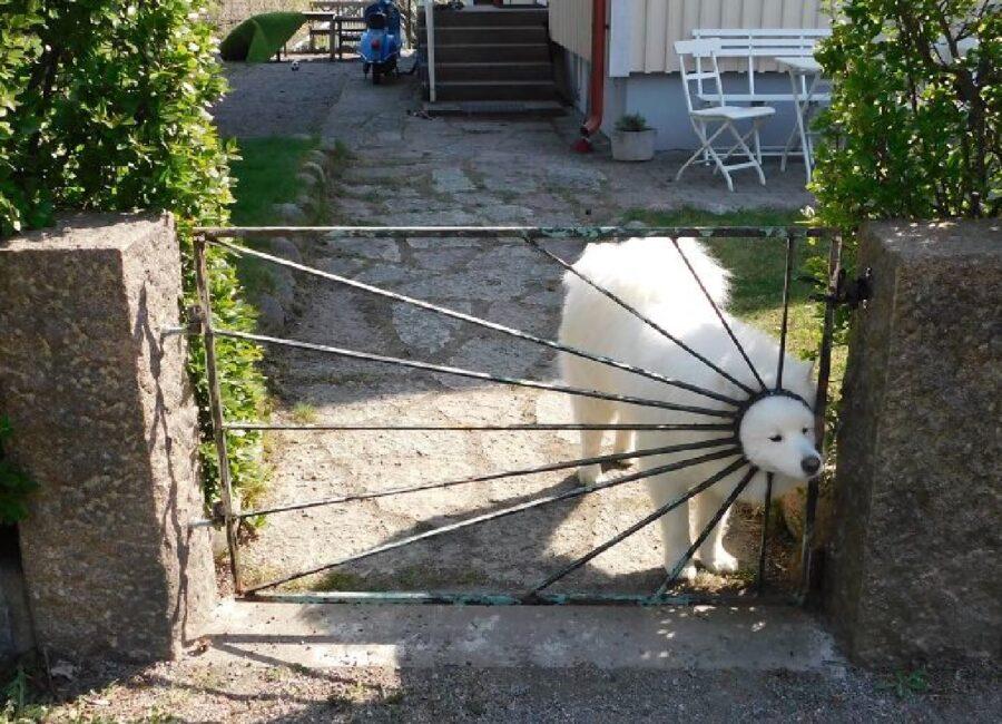 cane viso dentro recinzione