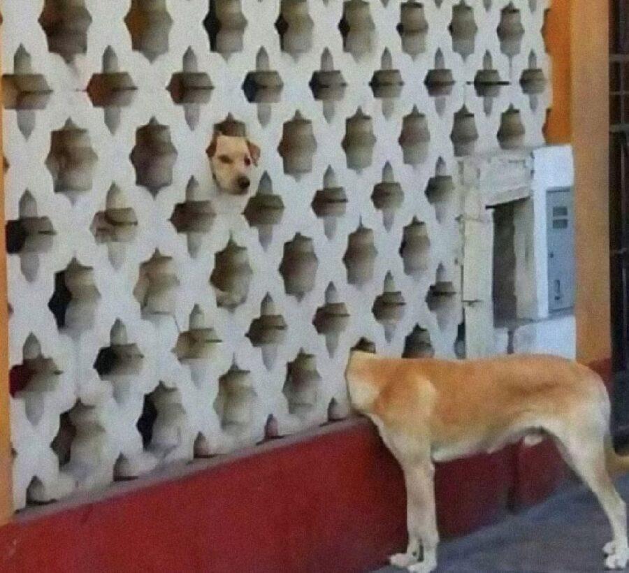 cane mette faccia dentro buco
