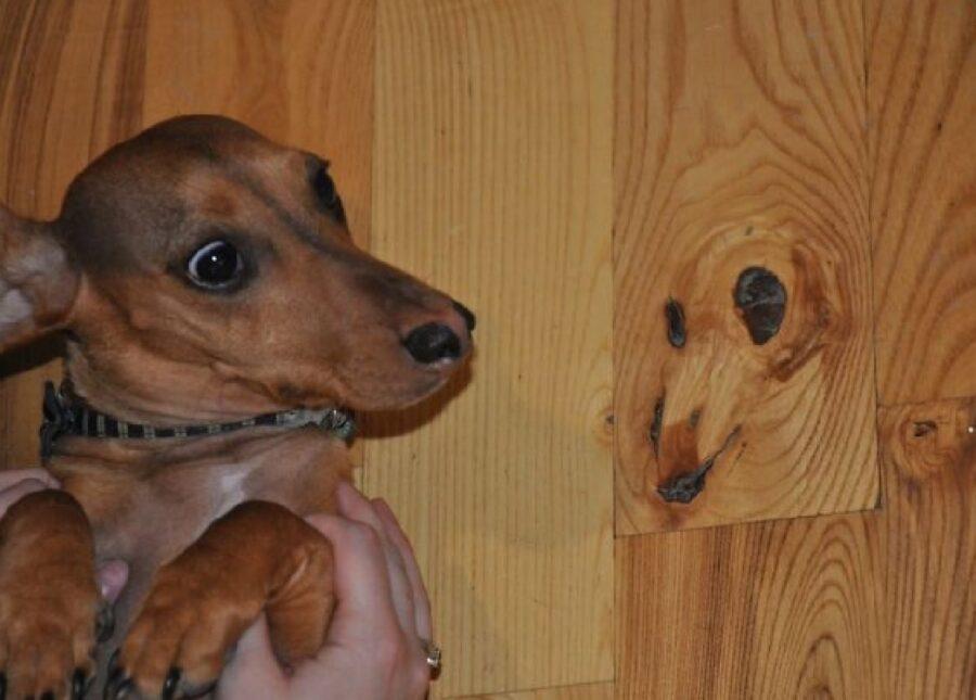 cagnolino faccia sul legno