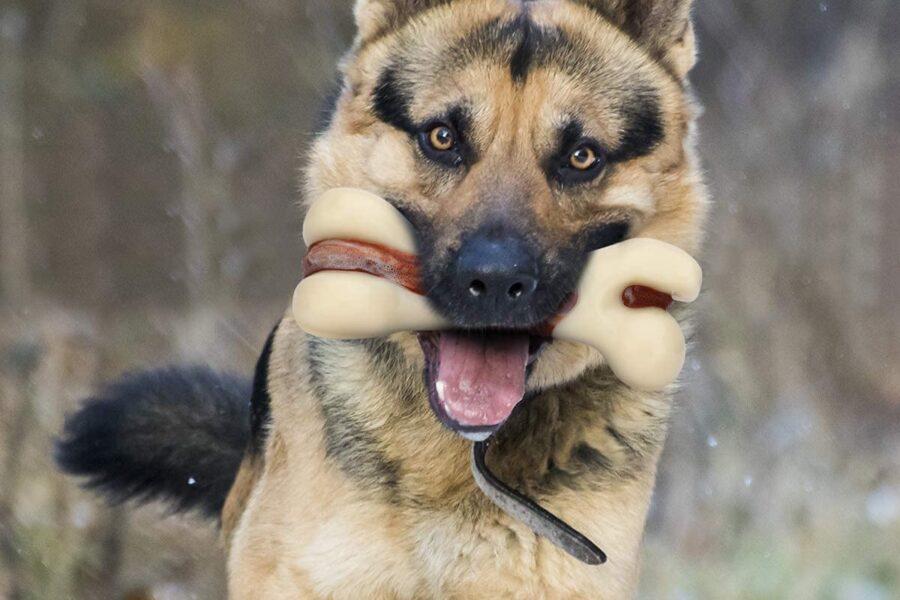 cane lupo con osso