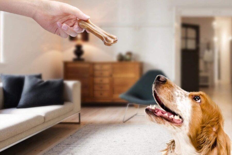 cane aspetta di mangiare osso