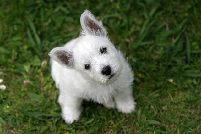 cucciolo adorabile faccia