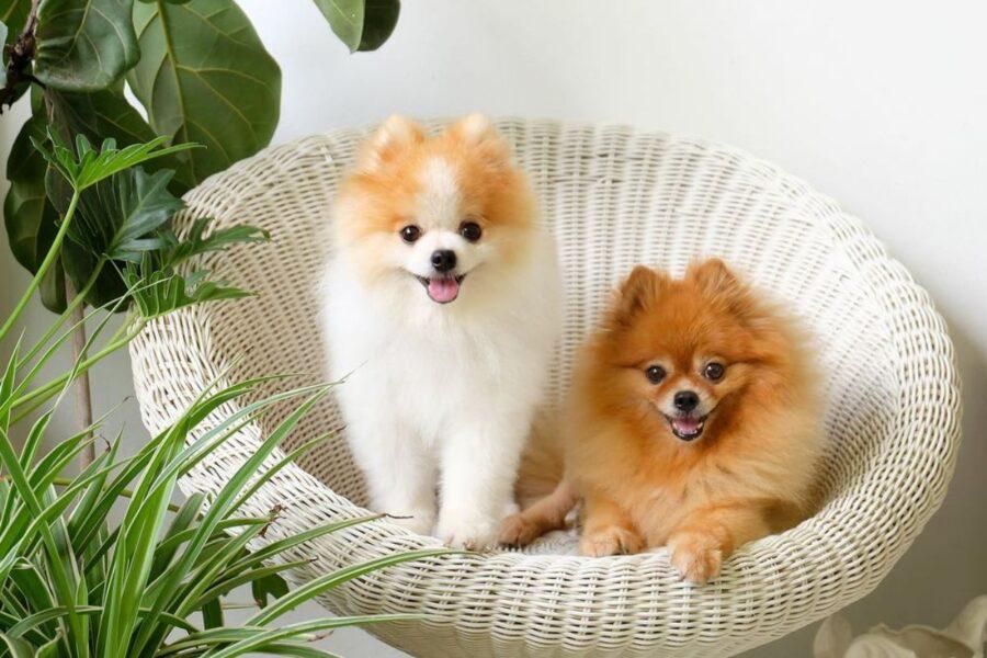 cani su una sedia di paglia