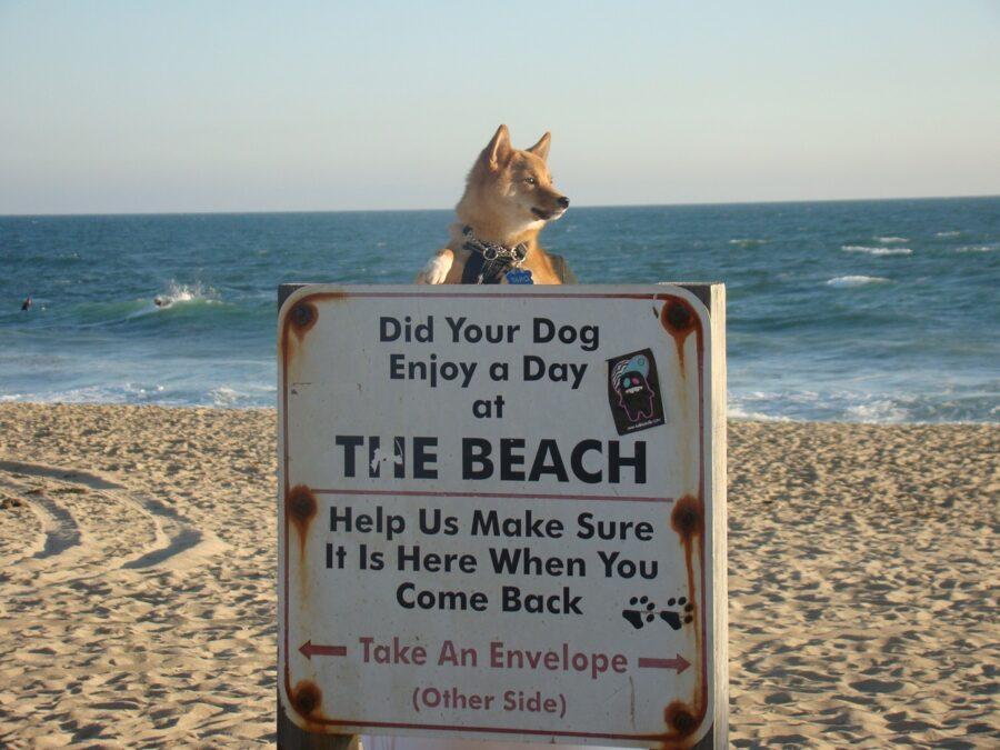 cane cartello spiaggia
