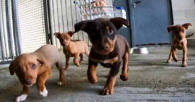 cuccioli cercano casa
