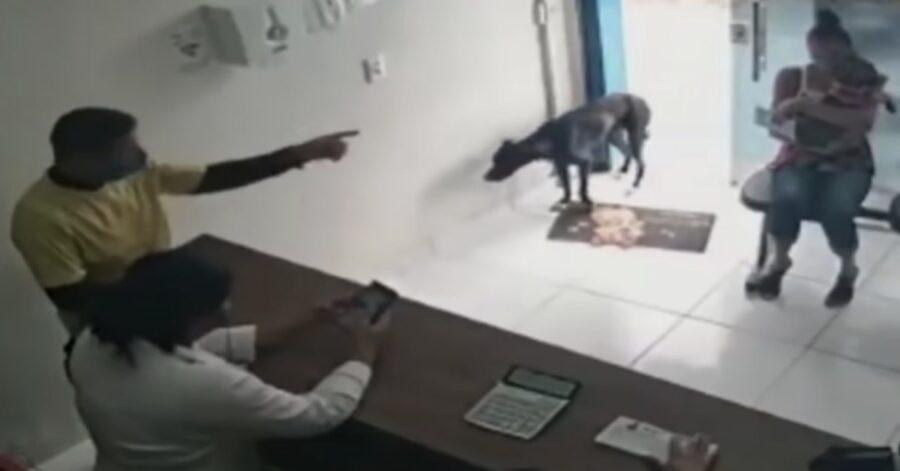 cane di strada entra in una clinica veterinaria
