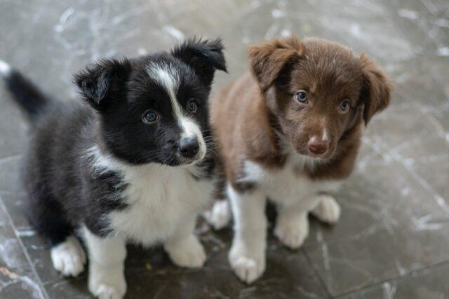 ricette per cani con il manzo