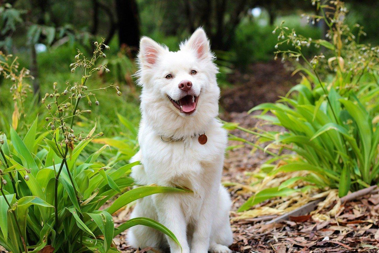 cane felice