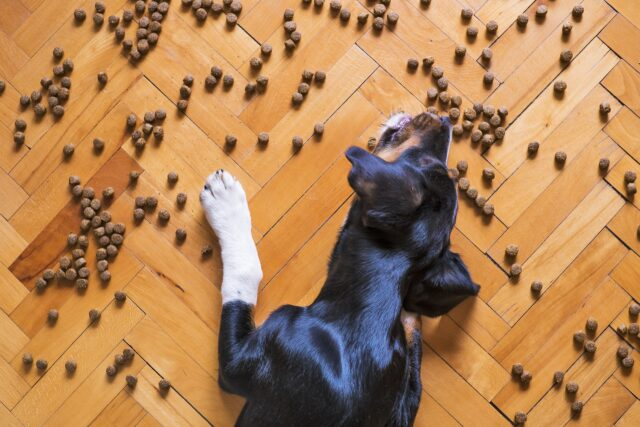 cane mangia crocchette