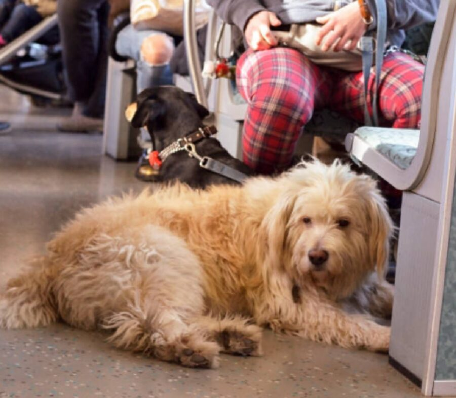 cane dentro bus insieme proprietario