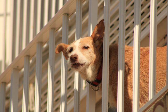 cane sul terrazzo
