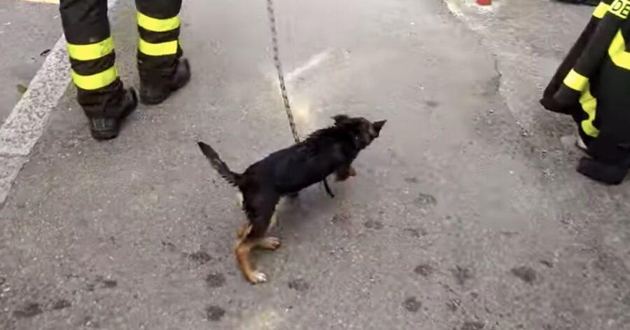 pompieri salvano un cane abbandonato su un terrazzo