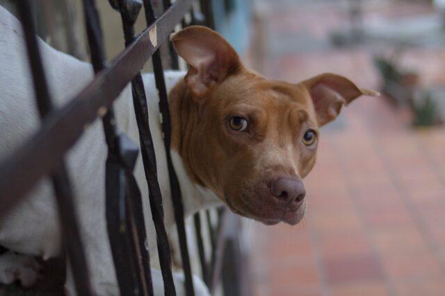 cane incastrato fra le sbarre