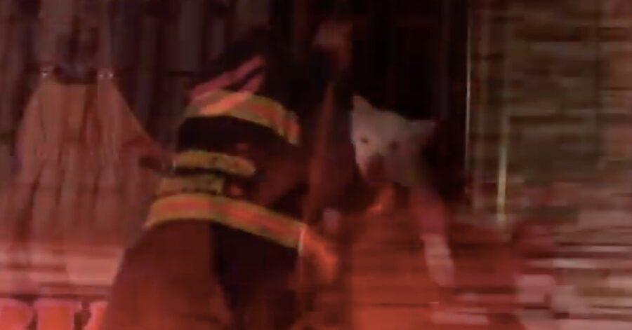 pompiere salva un cane in pericolo di vita