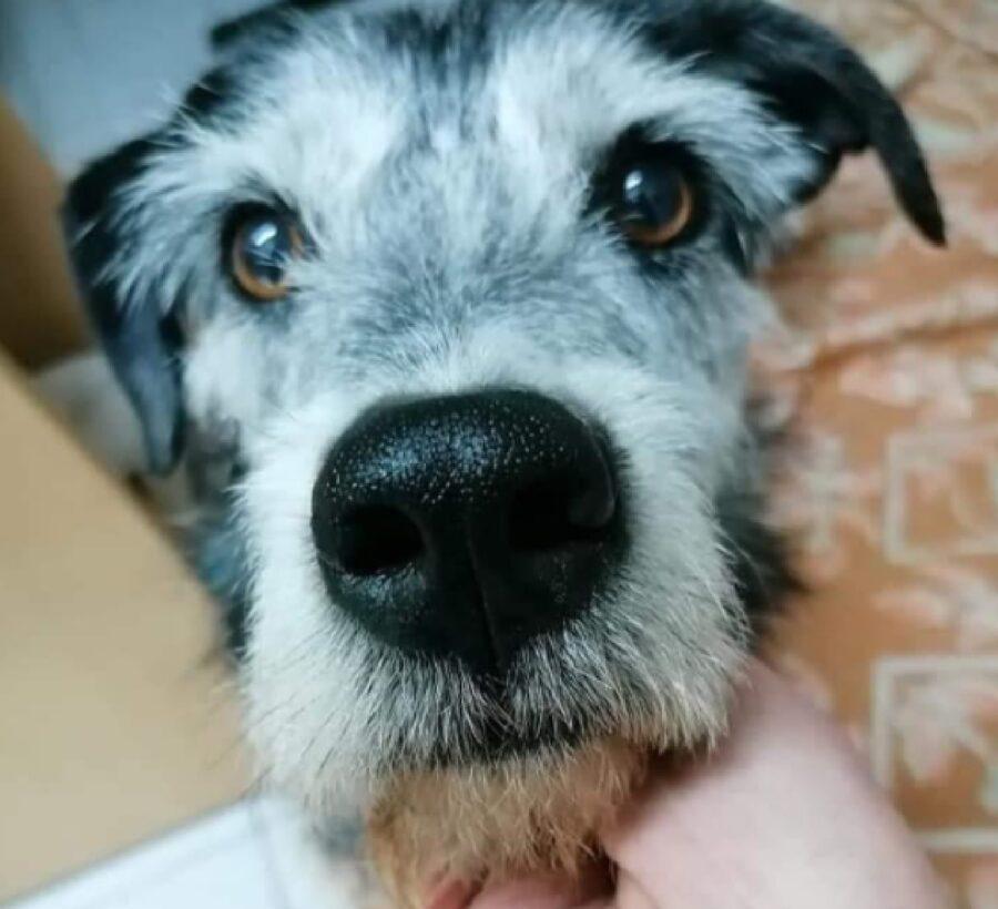 cane primo piano naso