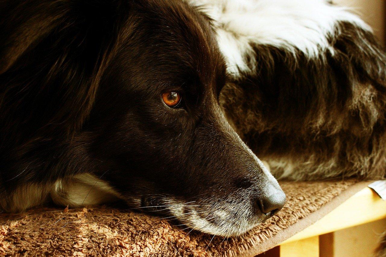 cane vuole riposare