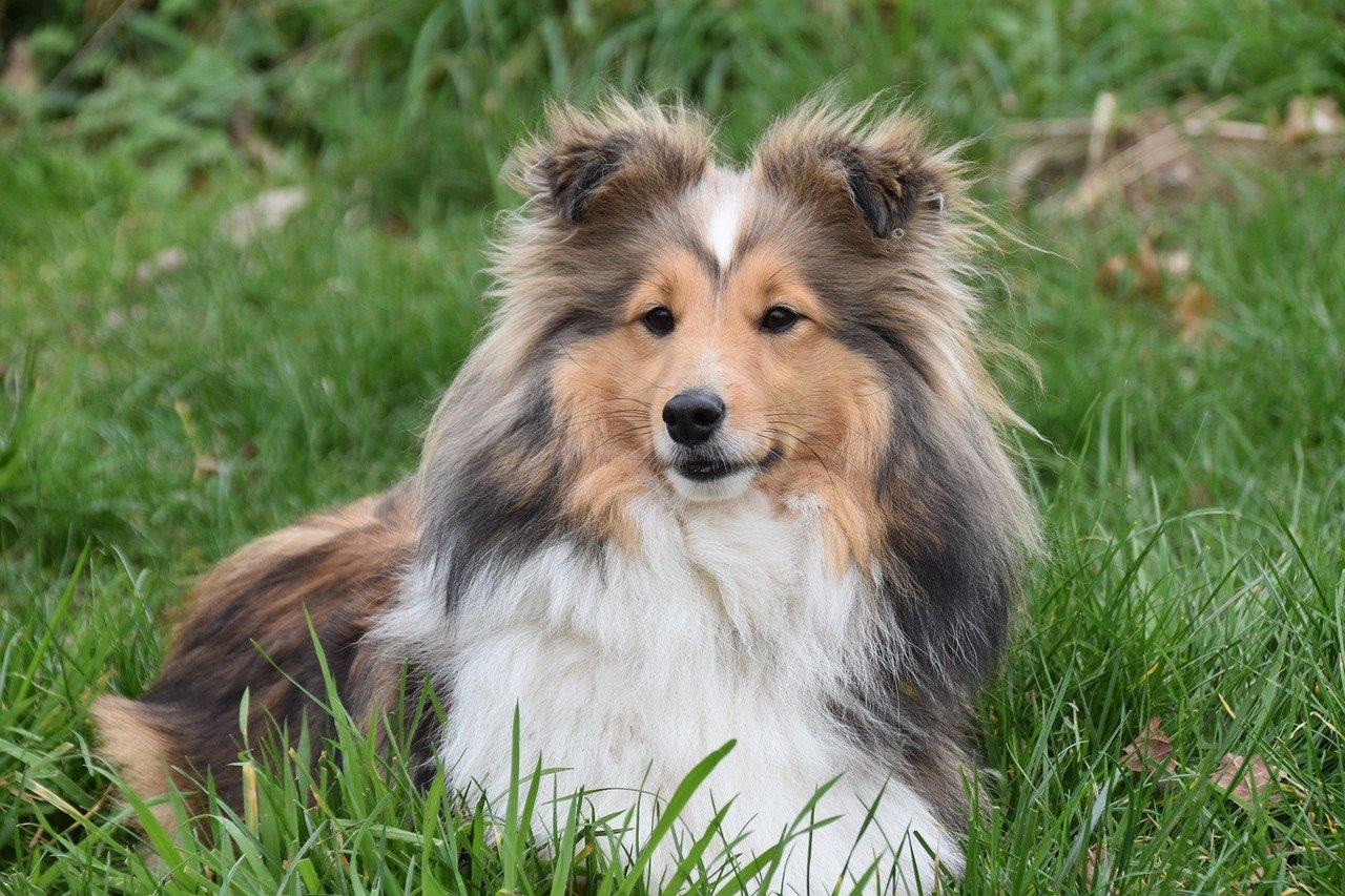 cagnolino elegante