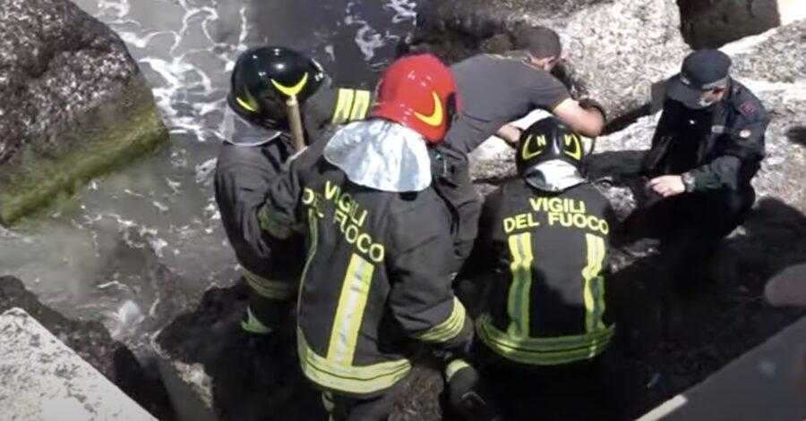 cane salvato a Trapani dai vigili del fuoco