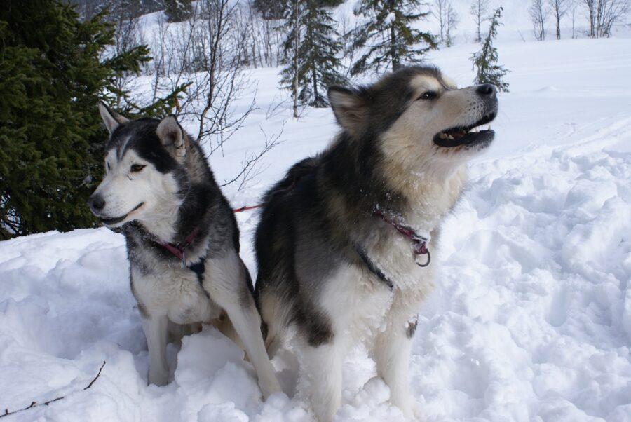 cani grande piccolo