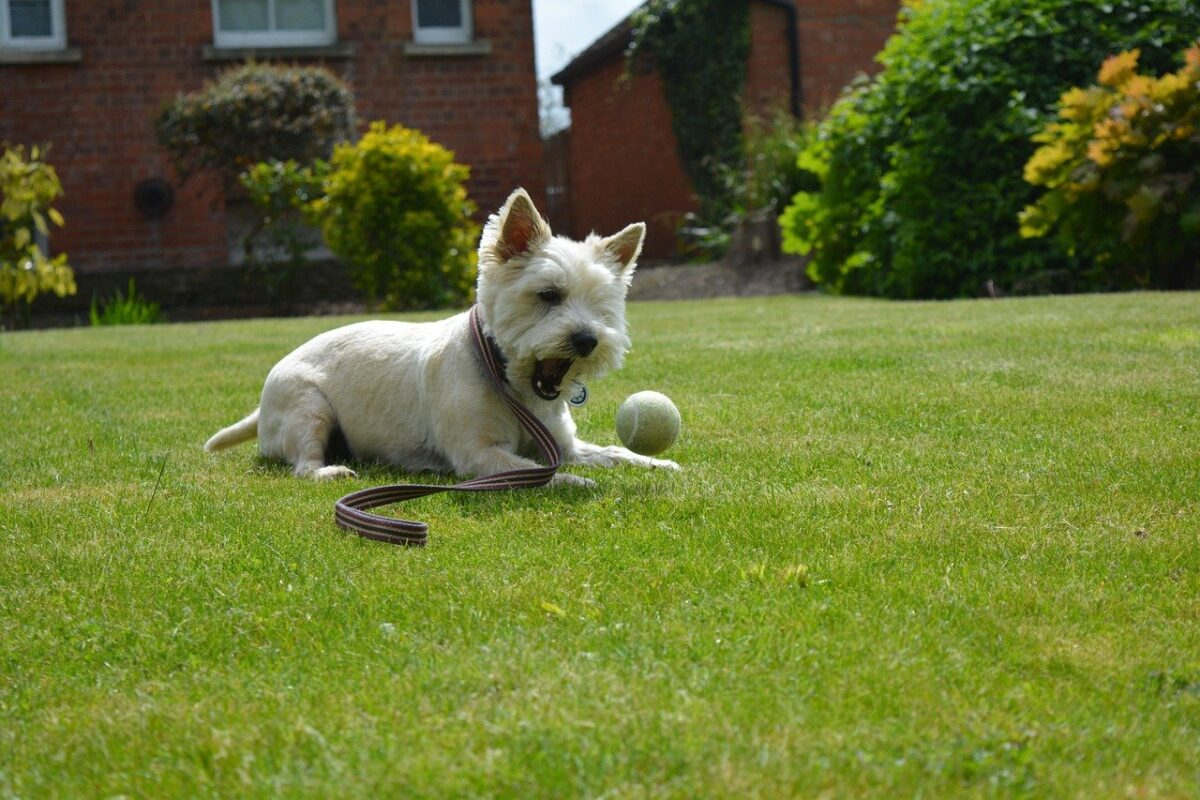 cane gioca in giardino