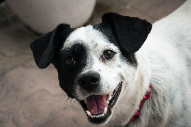 cane sorriso dolce