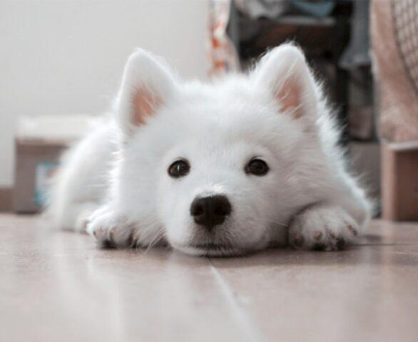 cane disperso bianco piccola taglia